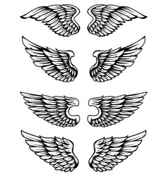 set of bird wings isolated on white background vector image