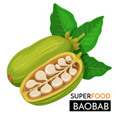 baobab icon vector image