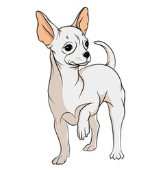 drawing a chihuahua isolated objects vector image