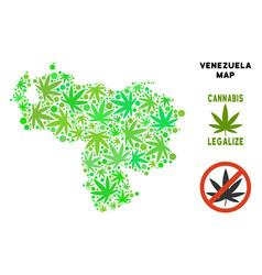 Royalty free cannabis leaves mosaic venezuela map vector
