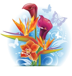 Bouquet of Strelitzia and Calla flowers vector image vector image