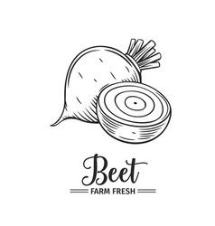 hand drawn beet icon vector image