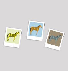Polaroid photo of horse vector