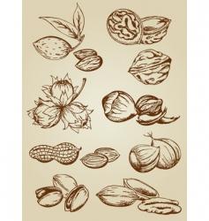 Set various nuts vector