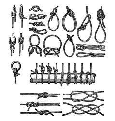 knots vector image