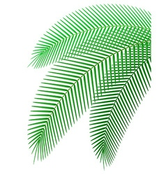 palm branch 01 vector image