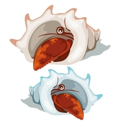 Red lobster peeking out of shell isolated vector