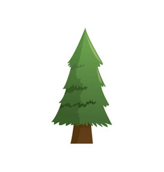 Cartoon pine tree natural plant conifer image vector