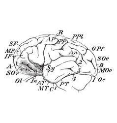 Chimpanzee brain vintage vector