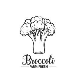Hand drawn broccoli icon vector