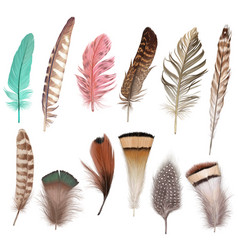 marvelous fluffy feather set vector image