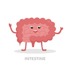 strong healthy intestine cartoon character vector image