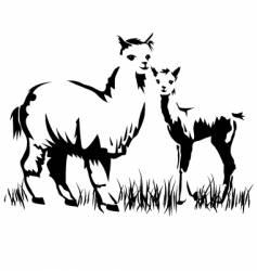 llamas vector image