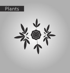Black and white style icon of flower paeonia vector