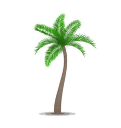 Tropical palm tree symbol vector image vector image