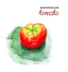 Tomato watercolor painting vector image vector image