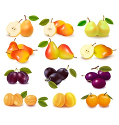 Apricots pears and plums vector