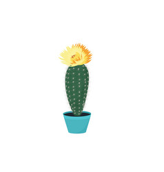 blooming cacti cactus in a pot potted home plant vector image