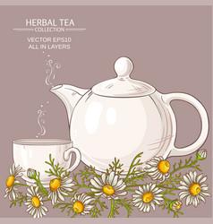 chamomile tea vector image