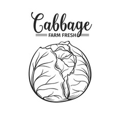 Hand drawn cabbage icon vector
