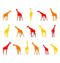 Silhouettes of giraffes vector
