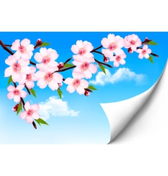 spring background a blossoming tree branch vector image