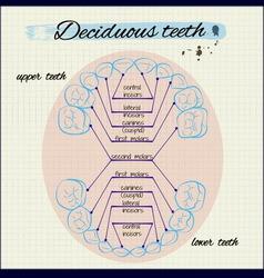 Human teeth vector image vector image