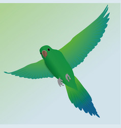 flying parakeet vector image