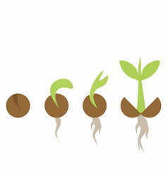 Set phases plant growth vector