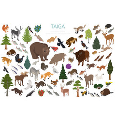 Taiga biome boreal snow forest 3d isometry design vector