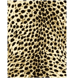 cheetah leopard animal skin texture vector image