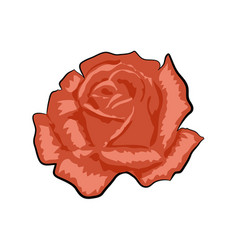 red rose isolated on a white vector image