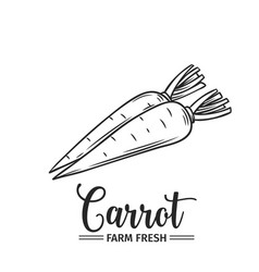 Hand drawn carrot icon vector