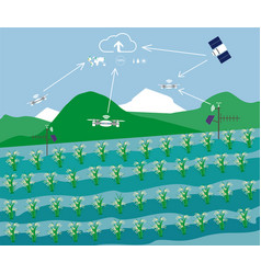 Rice field technology in agriculture vector