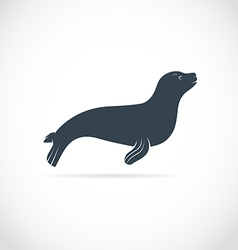 Sea lion vector