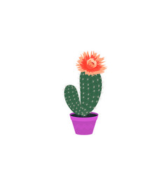 set blooming cacti cactus in a pot potted home vector image