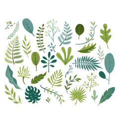 set of different tropical and other isolated vector image
