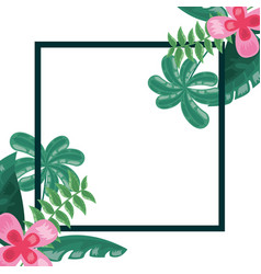 tropical flower leaves foliage frame decoration vector image