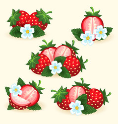 strawberry freshness fruit set vector image vector image