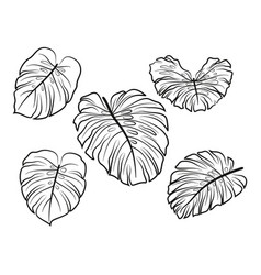 monstera leaves pictograms vector image