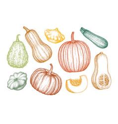 Pumpkins big set vector