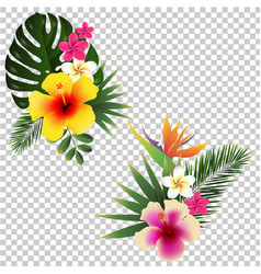 tropical flower set transparent background vector image