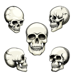 Views of human skull vector