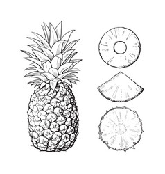 whole pineapple and slices - peeled unpeeled vector image