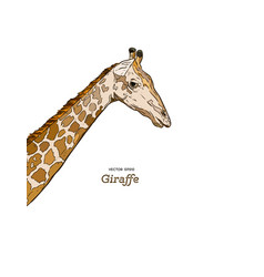 giraffe head sketch set vector image