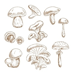 Autumnal forest mushrooms sketches set vector image vector image