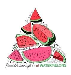 Watermelon Benefits 02 A vector image vector image
