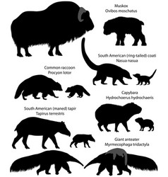 silhouettes of animals of america with cubs vector image