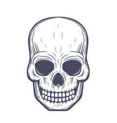 skull front view over white vector image