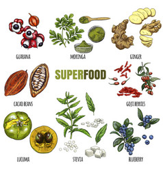 superfood set full color realistic sketch vector image